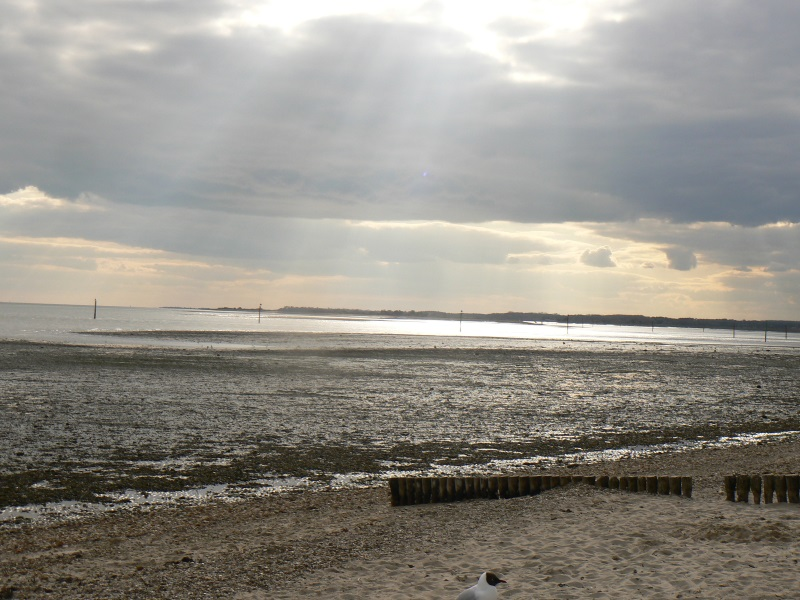 A Sunny Spring Evening on the Beach at Lepe Country Park beachcoming!