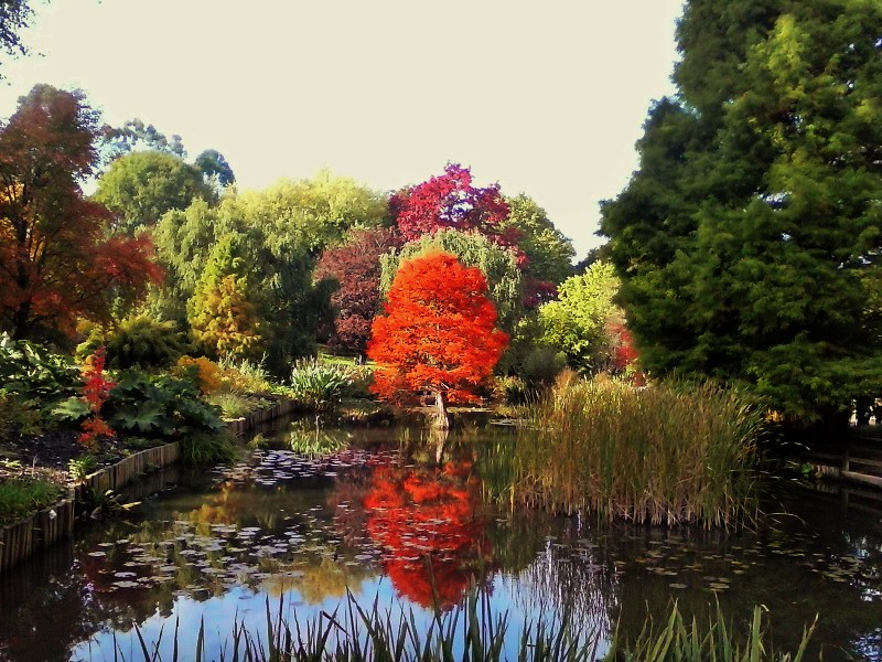 Peachick Diaries: Hillier Gardens in Autumn
