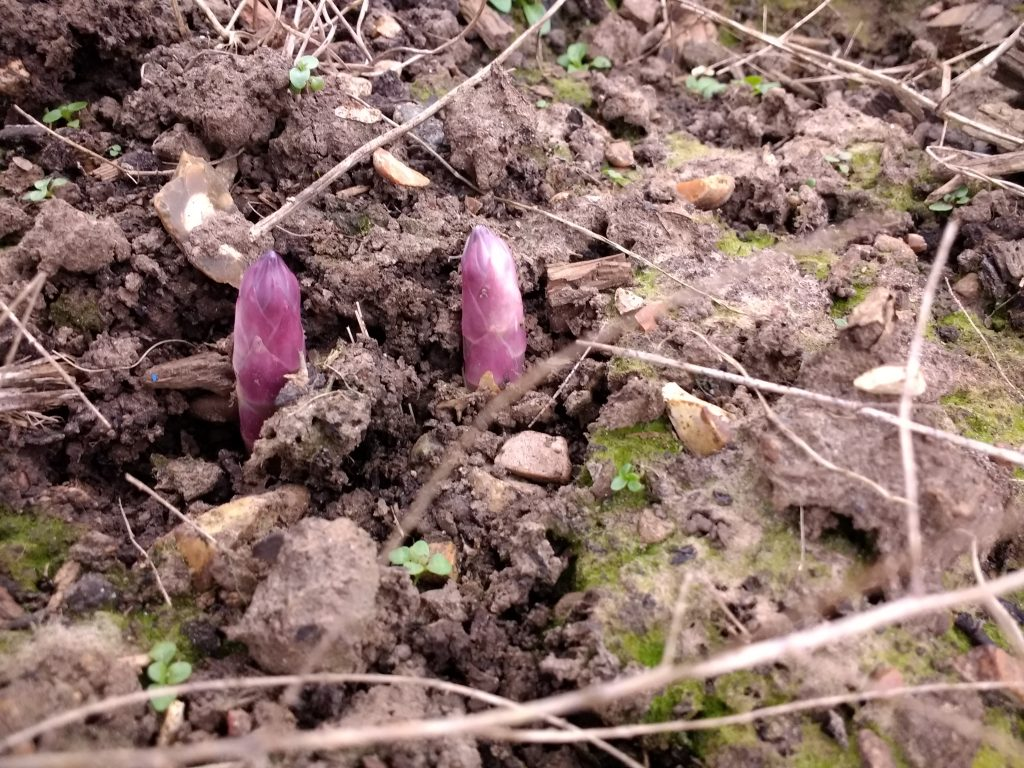 The Peachicks @No 17 Allotment Diaries #1 - Picking The Perfect Plot is full of our tips for choosing which allotment plot to take on!