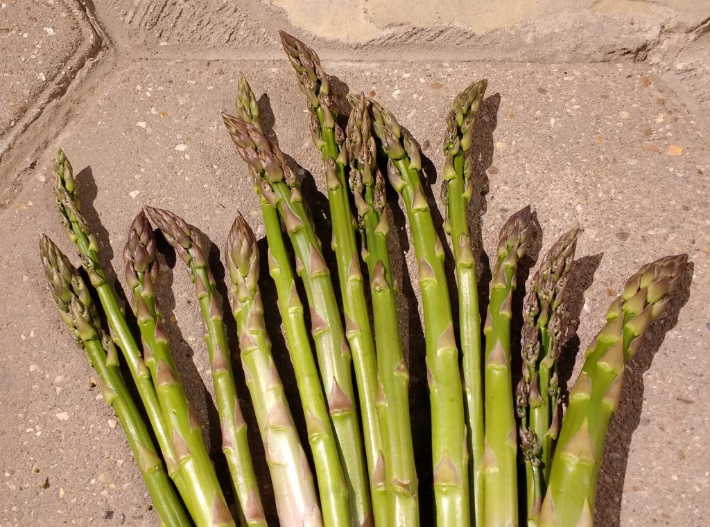 Asparagus is undoubtedly the Best of British Seasonal Veg. We've rounded up our Top Tips for Growing & Cooking Asparagus, based on our experiences of having a productive bed up at No17.  Check out the ultimate collection of Freefrom Asparagus recipes from The Peachicks' Bakery and a little help from our Foodie Friends.