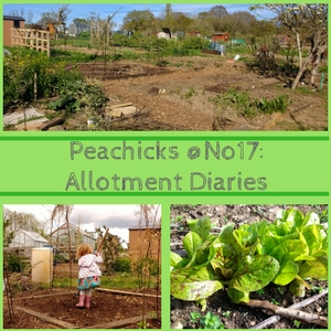 Peachicks @No17: