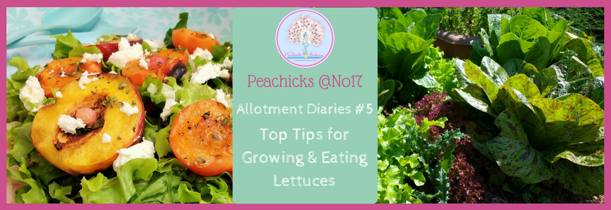 Peachicks @No17 Allotment Diaries: Top Tips for Growing & Eating Lettuce