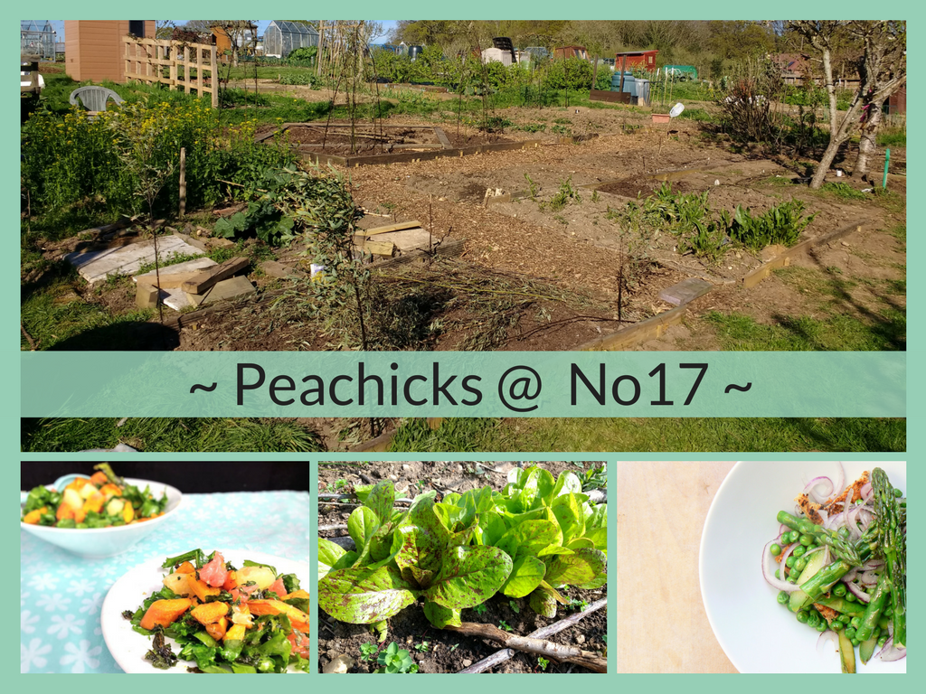 With 2018 swiftly approaching, read The Peachicks' Bakery Best of 2017. Find out our Top 5 recipes, catch up with all the news from Plot No17 and discover my exciting plans for the next 12months!